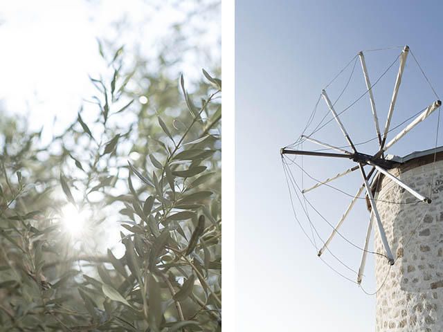 olive tree - windmill