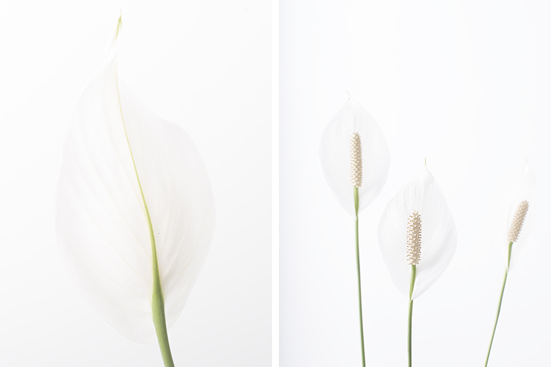 peace lily diptych
