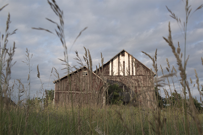 barn through grass